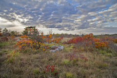 Landschaft mit rotem Smoketree Lizenzfreie Stockfotos