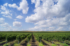 Landschaft mit schönen bulgarischen Weinbergen Lizenzfreie Stockfotografie