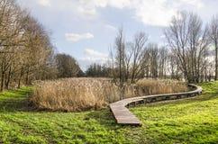 Landschaft mit Schilfen und plankbridge stockbilder
