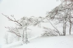 Landschaft mit schneebedeckten und eisigen Bäumen Lizenzfreie Stockfotografie