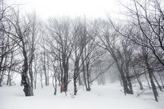 Landschaft mit schneebedeckten und eisigen Bäumen Stockfotos