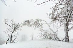 Landschaft mit schneebedeckten und eisigen Bäumen Lizenzfreies Stockbild