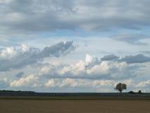 Landschaft mit schnellem Wachstumsplan Stockbilder