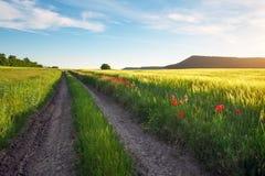 Landschaft mit Schotterweg zwischen Wiese früh im Frühjahr Lizenzfreie Stockfotografie