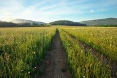 Landschaft mit Schotterweg zwischen Wiese im Fr?hjahr landwirtschaftlich lizenzfreie stockfotos
