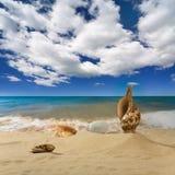 Landschaft mit Seashell und Steinen auf Hintergrund Lizenzfreies Stockfoto