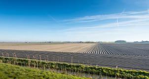 Landschaft mit sleeky gebildeten konvergierenden Kartoffelkanten Stockfotos