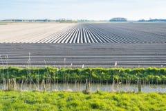 Landschaft mit sleeky gebildeten konvergierenden Kartoffelkanten Lizenzfreie Stockfotografie