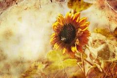 Landschaft mit Sonnenblume, Lichter des hellen Sonnenscheins stockfoto