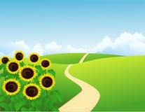 Landschaft mit Sonnenblumen Lizenzfreies Stockfoto