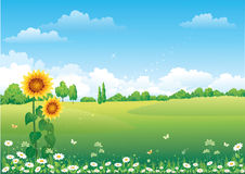 Landschaft mit Sonnenblumen Stockbild