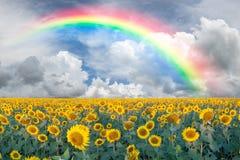 Landschaft mit Sonnenblumen und Regenbogen Stockbild