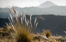 Landschaft mit Stiften lizenzfreies stockfoto