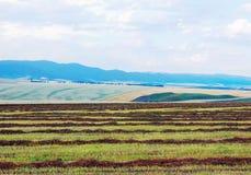 Landschaft mit Stroh auf dem gemähten Feld Stockfotografie