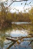 Landschaft mit Teich und unterbrochenem Baum Stockfotografie