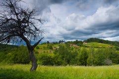 Landschaft mit trockenem Baum Stockfotos
