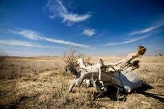 Landschaft mit trockenem Baum Lizenzfreies Stockfoto