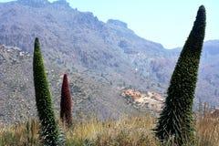 Landschaft mit Vegetation auf Nationalpark Teneriffa Berg Teide Kanarische Inseln spanien Stockfotos