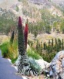 Landschaft mit Vegetation auf Nationalpark Teneriffa Berg Teide Kanarische Inseln spanien Lizenzfreie Stockfotos