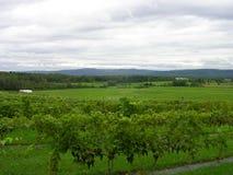 Landschaft mit Vinyard Lizenzfreie Stockbilder