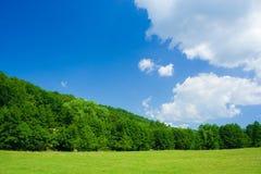 Landschaft mit Wald und grasffield Lizenzfreie Stockfotos