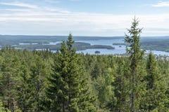 Landschaft mit Wald und See in Schweden lizenzfreie stockfotos