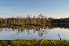 Landschaft mit Waldsee in Lettland Lizenzfreie Stockbilder