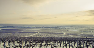 Landschaft mit Weinberg im Winter Stockfotos