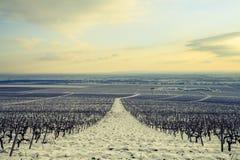 Landschaft mit Weinberg im Winter Stockfoto
