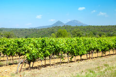 Landschaft mit Weinberg in Provence-Alpes-Feldbett e d'Azur Stockfotos