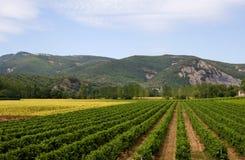 Landschaft mit Weinberg und Sonnenblumen in Frankreich Stockfotos