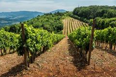 Landschaft mit Weinbergen und Hügeln Lizenzfreie Stockfotos