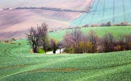 Landschaft mit Wellenhügeln, grünen Feldern und Bäumen, Süd-Morav stockbilder
