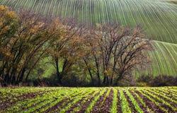 Landschaft mit Wellenhügeln, grünen Feldern und Bäumen, Süd-Morav lizenzfreie stockbilder