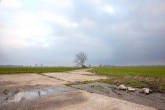 Landschaft mit Wiesen und Baum im niederländischen nahen houten lizenzfreie stockfotos