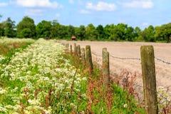 Landschaft mit Zeit des Unkrauts im Frühjahr Stockfotos