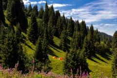 Landschaft mit Zelten in den Bergen stockfoto