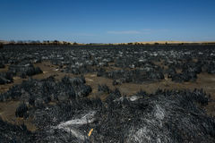 Landschaft nach Bushfire stockfotografie