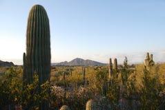 Landschaft nahe Phoenix stockfotografie