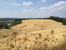 Landschaft nahe Siena, Toskana, Italien Stockbilder