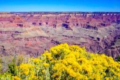 Landschaft am Nationalpark des Grand Canyon mit gelben Blumen stockfoto