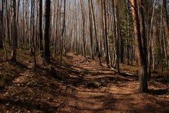 Landschaft, Natur Lizenzfreie Stockbilder