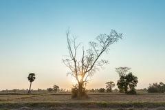Landschaft, Natur, Landwirtschaft Stockbild