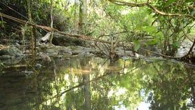 Landschaft noch des Wassers auf Fluss im Wald stock video footage