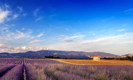 Landschaft in Provence, Frankreich Stockfotos