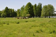 Landschaft in Schweden Lizenzfreies Stockfoto