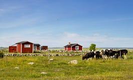 Landschaft in Schweden. Lizenzfreie Stockfotografie