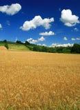 Landschaft am Sommer lizenzfreies stockbild