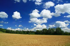 Landschaft am Sommer lizenzfreie stockbilder