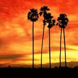 Landschaft am Sonnenunterganghintergrund Stockbild